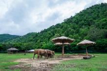 MPYH_2017_Thailandia_Chiang Mai_Elephant Nature Park_0050
