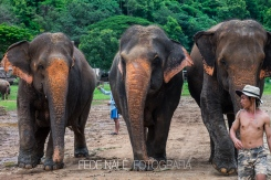 MPYH_2017_Thailandia_Chiang Mai_Elephant Nature Park_0070