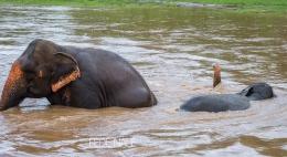 MPYH_2017_Thailandia_Chiang Mai_Elephant Nature Park_0076